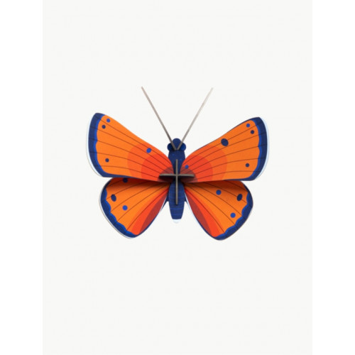 INSECTE COPPER BUTTERFLY PAPILLON