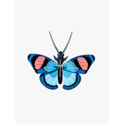 INSECTE PEACOCK BUTTERFLY PAPILLON